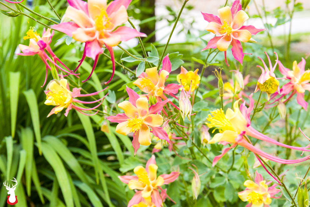 Early color our favorite spring blooming perennials mightylinksfo